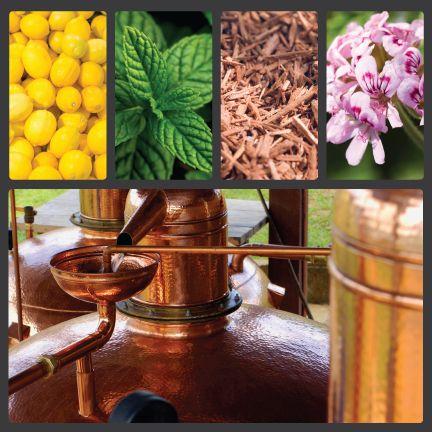 essential-oil-distillation