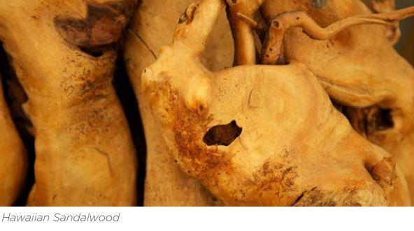 hawaiian-sandalwood