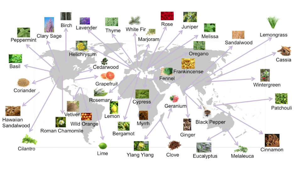 essential-oils-global-sourcing